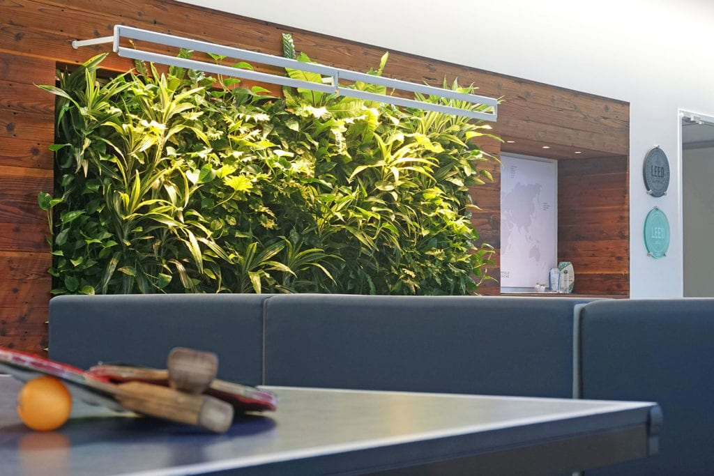 Close-up of a table tennis table against a living green wall at the Buro Happold LA office