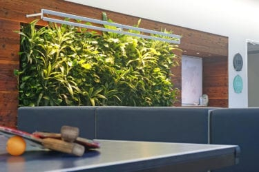 Close-up of a table tennis table against a living green wall at the BuroHappold LA office