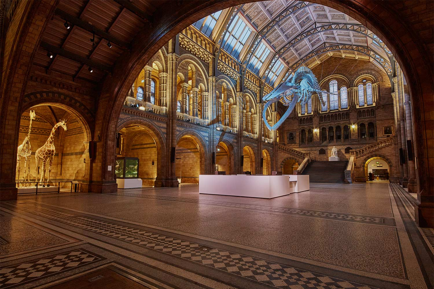 Foyer Museum Zoo : Natural history museum project series burohappold