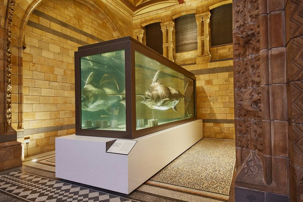 national history museum london refurbishment