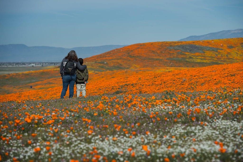 People standing in a flowery meadow in LA
