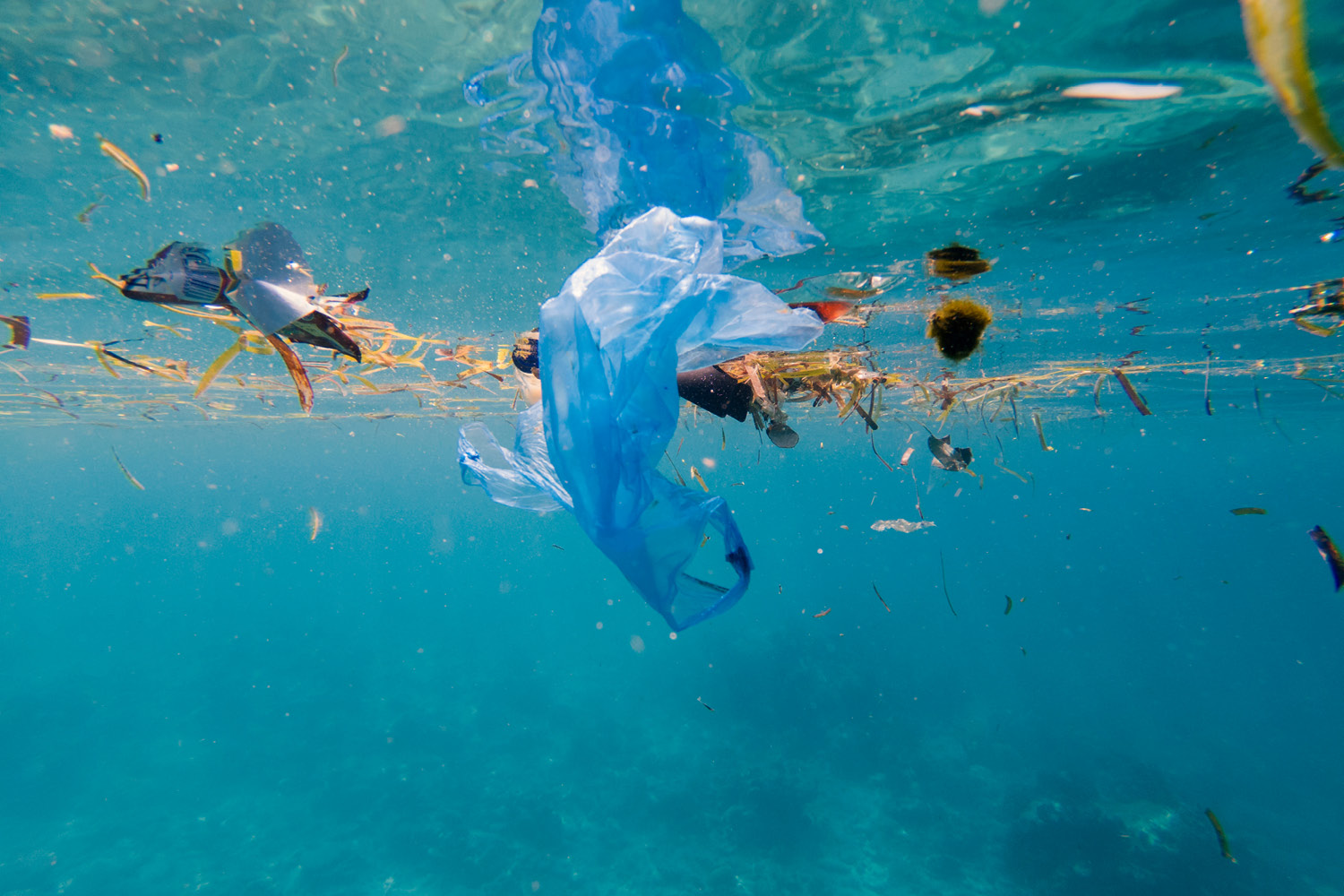 Plastic pollution on marine environment